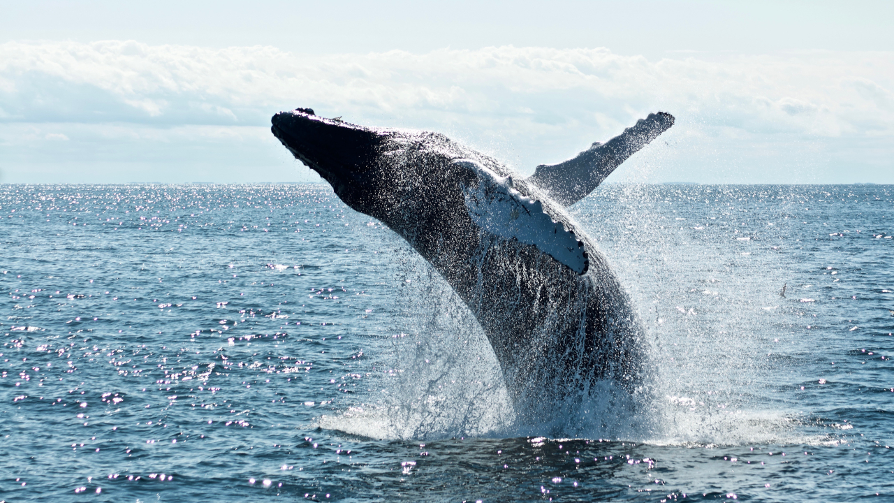 Are whales controlling the price of Bitcoin? New report weighs in